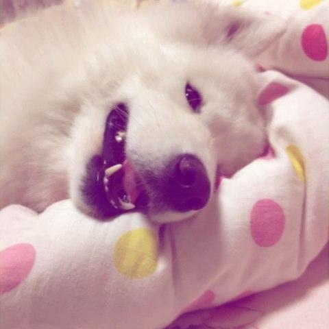 猪睡觉萌萌哒图片大全可爱