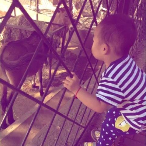 动物园的一天!