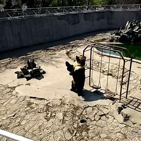 崖柏木雕熊大图片