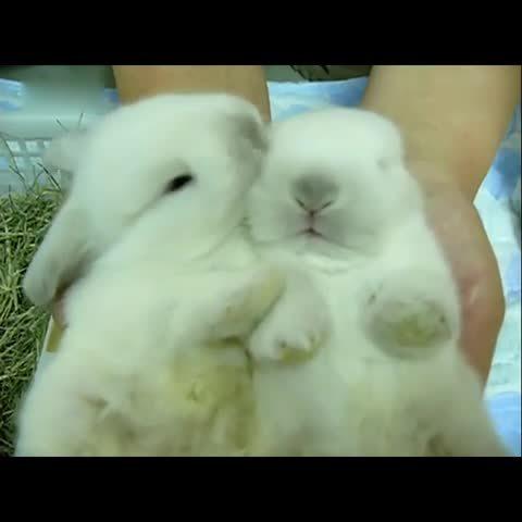 萌宠乐园  09-23 萌兔子亲亲双胞胎兔兔                 166 19