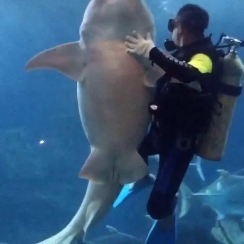壁纸 海底 海底世界 海洋馆 水族馆 480_480