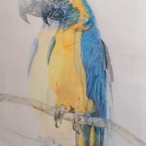 手绘彩铅画#最近画人画残了,画点动物