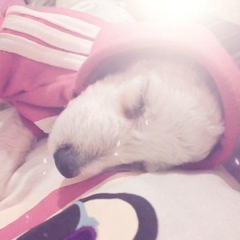 """来看看我拍的视频:""""幸福狗狗啊,长期在我怀里睡觉"""
