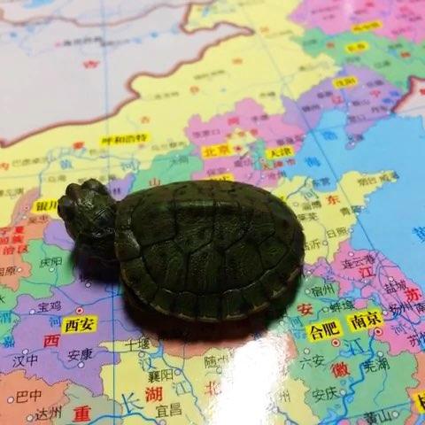 超轻粘土乌龟教程图解