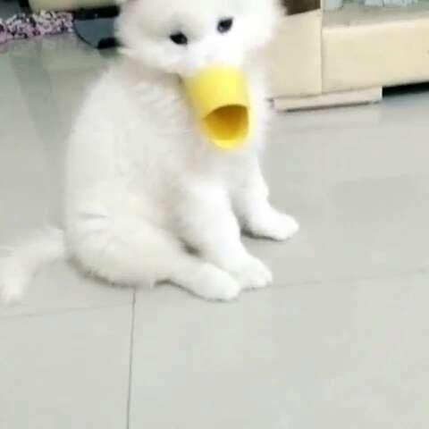 鸭子狗#宠物